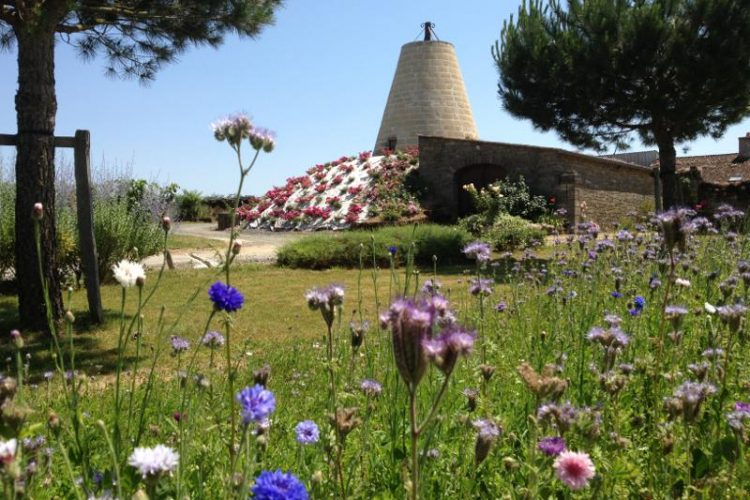 jachere fleurie, roses et moulin du domaine des bleuces
